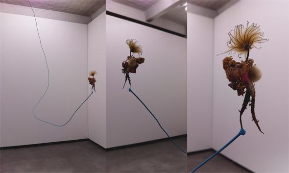"Judith Schwinn, ""Planet Earth Rebirth"", Installation vew, photograph by Amee Lê"