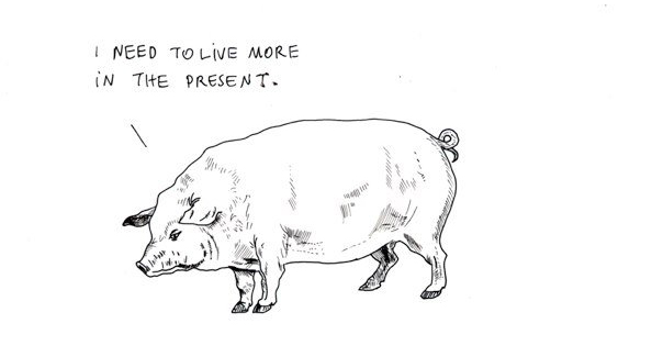 Alaeff, Pig