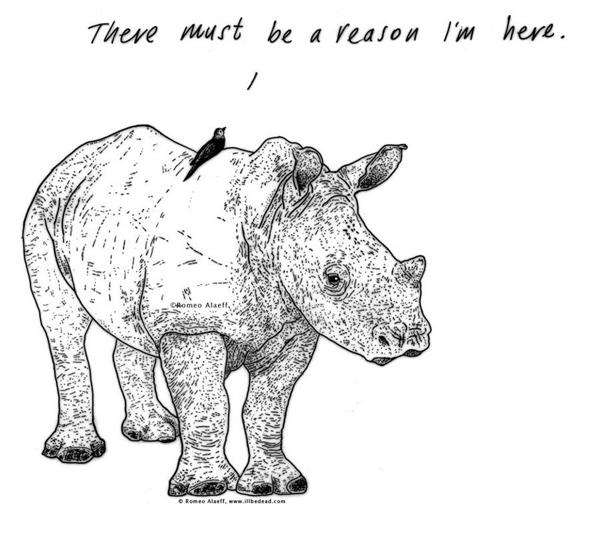 Alaeff, Rhino