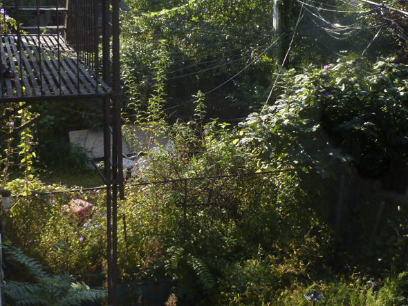 Brooklyn Backyards by Barbara Confino