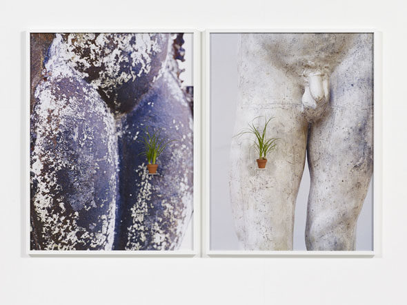 "Ernesto Neto - ""btw us"" (2013), 2 photographs, 2 ceramic pots with plants (Kalanchoe tomentosa and Aloe variegata), diptych: 146 x 110 cm each; courtesy of Galerie Max Hetzler"
