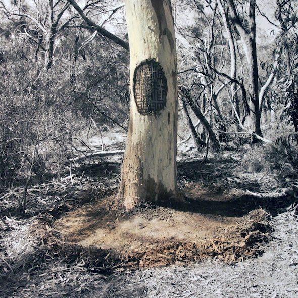 James Tylor, 'Un-Resettling (Scar Tree)', hand coloured digital print, 2016 // courtesy of the artist
