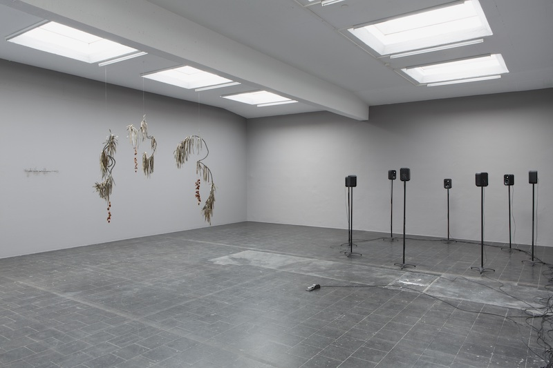Majnoon Field exhibition review