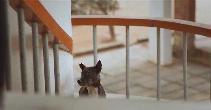 berlinartlink interspecies fogdog