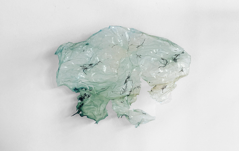 A translucent piece of light green-blue algae-based bioplastic hangs against a white wall. Small pieces of seaweed are embedded within the bioplastic.