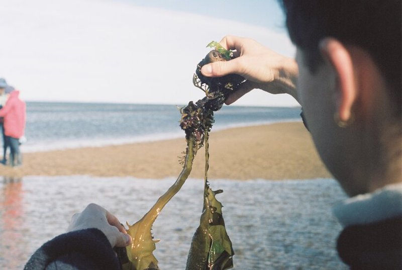 A person holds a piece of seaweed and stretches it between their hands. They're standing on the coastline with the ocean and sand in the background.