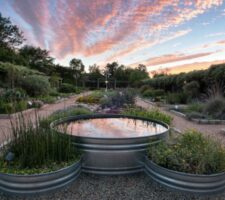 A sunset above a garden with a pond.