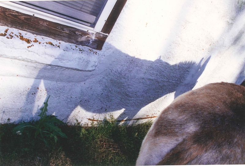 the shadow of a donkey on the white wall of a house