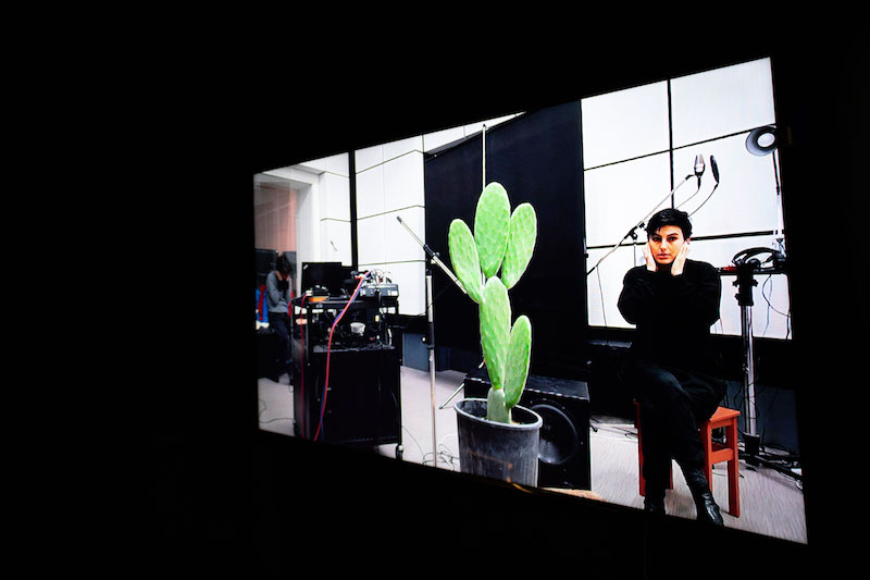 a photo of a projected video of a person recording a conversation with a cactus