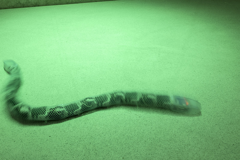 A robotic snake moving through the green lighted exhibition space of Kunsthaus Bregenz