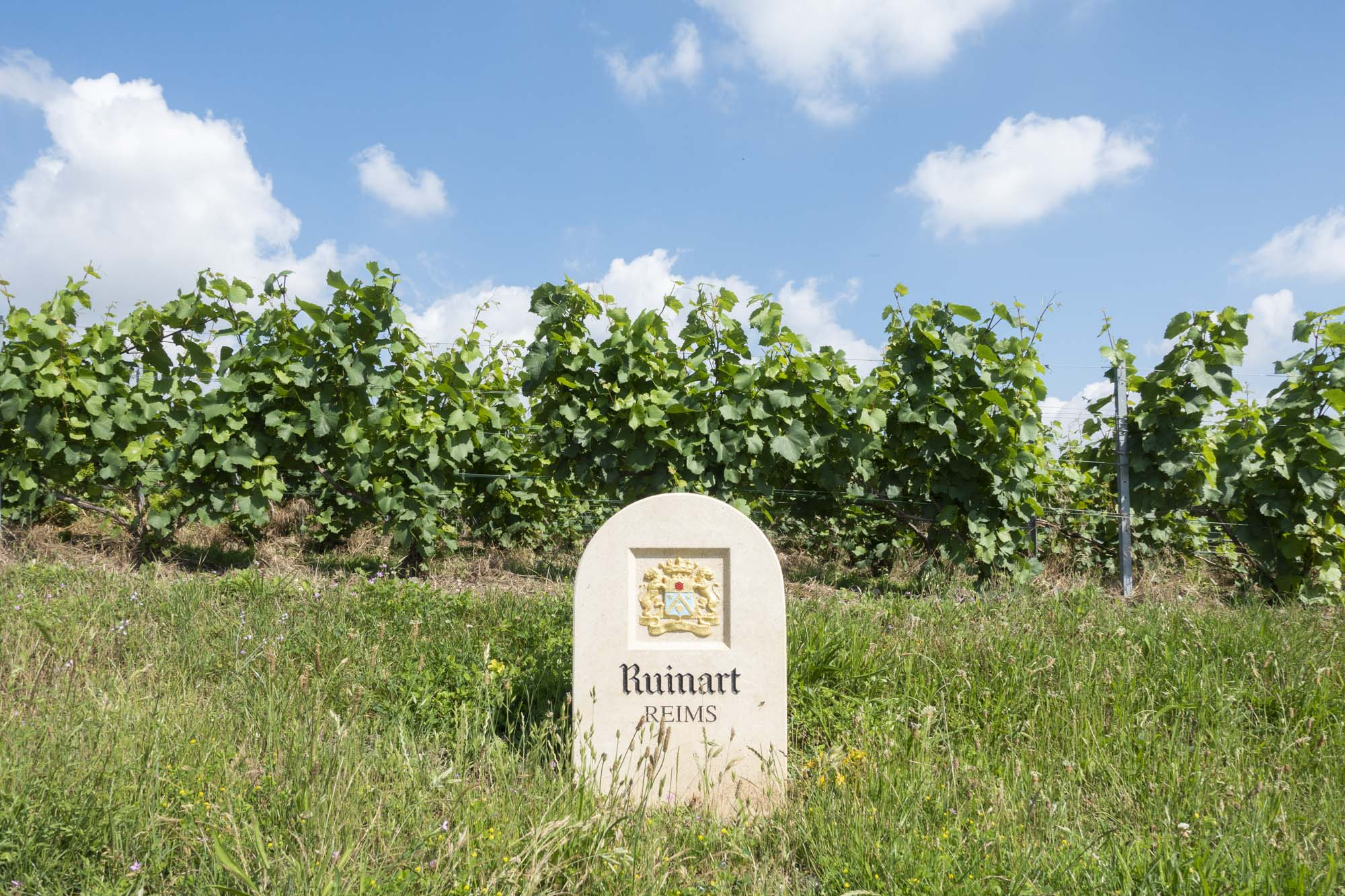 Stone with Ruinart coat of arms on it in the vineyards in Champagne near Reims